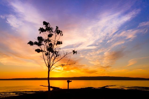 Sunrise Belfast Lough